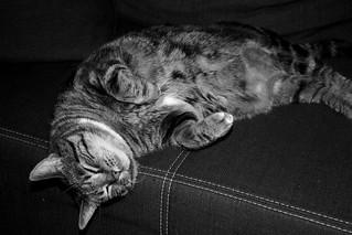 Sleepy Strucki