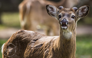 Young Buck smiling for his portrait