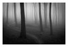 Friston Forest - March 9th (Edd Allen) Tags: forest trees tree treescape mist nikond610 nikon d610 70200mm landscape country countryside atmosphere atmospheric sunrise uk eastsussex woods woodland serene bucolic melancholy foliage leaves fristonforest fog path pathway blackandwhite nocolour contrast bw ngc spring