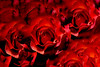 clouds of roses (mariola aga) Tags: macro closeup contentaware blending doubleexposure flower rose petals red black art alittlebeauty floralfantasy ngc npc