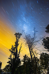 Tree Tops (10iggie) Tags: milkyway stars trails night longexposure color nightphotography