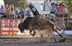 Bull market (Scon_RAD) Tags: rodeo bull action fast d750 nikon animal tam tamron ride australia victoria merrijig frig dirt cowboy