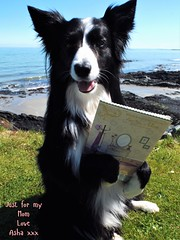 Just for my Mom (ASHA THE BORDER COLLiE) Tags: mothers day card cute dog pic ashathestarofcountydown