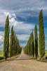 Agriturismo Poggio Covili - Zypressen (AnBind) Tags: ausland fotoreise orte urlaub arrreisen italien cinqueterreundtoskana ereignisse 2017 castiglionedorcia toscana it