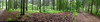20170628_i12 Forest road panorama | Białowieża Forest, Poland (ratexla) Tags: ratexlasinterrailtrip2017 28jun2017 2017 interrail interrailing eurail eurailing tågluff tågluffa tågluffning travel travelling traveling journey epic europe earth tellus photophotospicturepicturesimageimagesfotofotonbildbilder wanderlust vacation holiday semester trip backpacking tågresatågresor resaresor europaeuropean sommar summer ontheroad beautiful poland polska białowieżaforest bialowiezaforest białowieża bialowieza nature iphone5 iphone green landscape scenery scenic hiking hike forest skog lövskog deciduousforest panorama