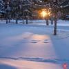 Evening at a park 6 (Kasia Sokulska (KasiaBasic)) Tags: canada alberta edmonton river valley rundle park winter landscape snow cold evening