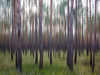 blurred forest (GeoMatthis) Tags: unschärfe wald forest tree baum kiefer pine green red orange contrast abstract blur landscape