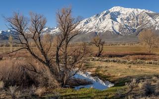 *Eastern Sierra Springtime*