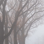 Foggy Trees at Ontario Place thumbnail