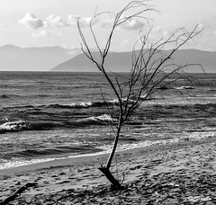 Solo (danilocolombo69) Tags: biancoenero albero mare onde schiuma danilocolombo69 montagne nuvole danilocolombo nikonclubit cavedimarmo fortedeimarmi