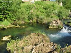 Pliva (crnabambula) Tags: pliva flyfishing bosnia balkans flyfishingmix trout grayling ivanrandjelovic