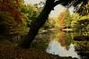 Autunno al Parco di Monza. (SALVO 1) Tags: bosco autunno parco verde giallo acqua albero foglie colori