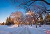 Evening at a park 4 (Kasia Sokulska (KasiaBasic)) Tags: canada alberta edmonton rundle park winter evening snow trees landscape cold river valley