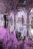 Hakata Sakura Illumination (tomosang R32m) Tags: cherryblossom sakura illumination hakata fukuoka japan station jr 福岡 博多 桜 さくら イルミネーション 夜景 yakei 雨 リフレクション 反射 rain reflection night 博多駅