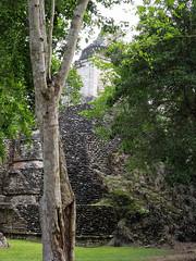 P1041140-1 (zrim) Tags: dzibanche mexico 2018 maya mayan jungle archeology pyramids