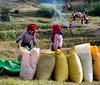 Working fields Shan state (adriandc2010) Tags: httpswwwflickrcomphotostagspeople burma shanstate myanmar