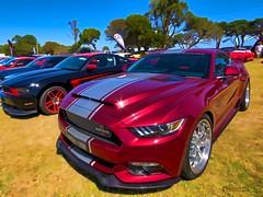 Shelby (Thunder1203) Tags: shebycobra shelbysupersnake fordmustang coolcars carshow hdr shannonswalk