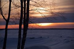 Meribjörkö (STTH64) Tags: sunset sun sky trees sea
