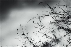 * (PattyK.) Tags: ioannina giannena giannina epirus ipiros balkans hellas ellada greece grecia griechenland mycity whereilive march 2018 spring snapseed amateurphotographer ιωάννινα γιάννενα ήπειροσ βαλκάνια ελλάδα ηπόλημου όμορφηπόλη άνοιξη μάρτιοσ λίμνη παμβώτιδα λίμνηπαμβώτιδα λίμνηιωαννίνων παραλίμνιο μώλοσ δίπλαστηλίμνη lake pamvotida lakepamvotida ioanninalake lakeside lakefront waterfront bythelake άσπροκαιμαύρο monochrome blackandwhite nikond3100 tree branches δέντρο