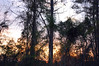 Evening Scene. (dccradio) Tags: lumberton nc northcarolina robesoncounty outside outdoors evening lateafternoon dusk sky bluesky colorfulsky eveningsky tree trees treelimbs treebranches woods wooded forest backyard branches branch sticks nature natural nikon d40 dslr sunset settingsun