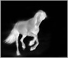 Black Horse (claudiafreebird) Tags: great negative horse pferd paard weiss schön black bw white