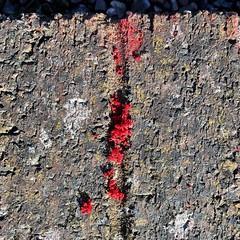 Cen coch (Rhisiart Hincks) Tags: texture gwead red coch wales cymru ceredigion ynyslas bricks briciau lichen cenycerrig man crotal lav zuzmó gorri ruz rouge dearg ue eu ewrop europe eòrpa europa aneoraip a'chuimrigh kembra kembre gales galles anbhreatainbheag 威爾斯 威尔士 wallis uels kimrio valbretland 웨일즈 велс เวลส์ ويلز uells ουαλία velsa velsas уельс уэльс уелс falla balla wal horma moger wall mur fal stěna vägg зид zid siena seinä