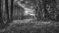What Lies Ahead (writing with light 2422 (Not Pro)) Tags: hff happyfencefriday whatliesahead kosmos washingtonstate blackandwhite bw monochrome trees mountain gate landscape richborder sonya7 zeiss