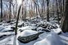 Ice Storm [02.08.18] (Andrew H Wagner | AHWagner Photo) Tags: mountain maryland md nature landscape outdoors cunninghamfalls cunninghamfallsstatepark thurmont winter snow ice frozen explore exploration exploring hiking trees tree 5dmk3 5d3 5dmkiii 5dmarkiii 5dmark3 ultrawideangle wideangle canon eos 1635l 1635mm f4 f4l is usm