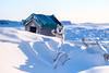 Sled Dogs in Harbour-11 (Kristaaaaa) Tags: animals arctic canada dog dogs dusk fur huskey north nothwestterritories sleddog snow tuktoyaktuk winter
