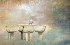Perfectly Lonely (jade2k) Tags: table louisemoorepark pa owl texture