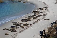 IMG_7673 (mudsharkalex) Tags: california pacificgrove pacificgroveca