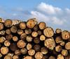Stacked (Wouter de Bruijn) Tags: fujifilm xt2 fujinonxf56mmf12r stack stacked tree trees log logs round wood nature outdoor sky bluesky westenschouwen zeeland nederland netherlands holland dutch