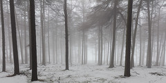 The Unknown (David Ball Landscape Photography) Tags: winter snow mist fog landscape landscapes photography outdoors uk woodland forest canon nature moody travel trees tones spooky storm foggy wwwdavidballphotographycouk davidballlandscapephotography 2018 fineart