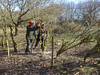 Hedge-laying 2018 (Gareth Christian) Tags: boughbeech kentwildlifetrust kwt sonydschx90v sevenoaksdistrict england unitedkingdom gb hedgelaying