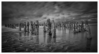 Groynes by low tide