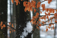 Branches (David K. Marti) Tags: forest woods tree trees plant detail closeup trunk branch branches leaves foliage country countryside nature natural wood wooden light shadow day daylight snow cold snowfall flakes winter season seasonal outdoors outdoor outside color colored colorful white black brown orange red reddish peaceful calm quiet coldness