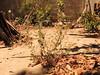 Planta Verano (jponcepenate) Tags: planta verano una fotografía con wb en flash la iluminación de cámara es que se produce desde un balance blanco del jardín lo más destacable este tipo negativo use 3 el iluminados muestran relieve las superficies iluminadas esta foto tome casa mi tía utilizando caliente cual estaba frente buen zoom toma quería realizar