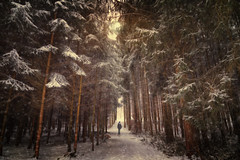the sound of snow (Chrisnaton) Tags: winterwalk winterforest snow trees wald winterwald foresttrail nature walking hiking thesoundofsnow