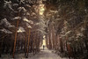 the sound of snow (Chrisnaton) Tags: winterwalk winterforest snow trees wald winterwald foresttrail nature walking hiking thesoundofsnow