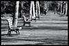 Tokyo: Impressions of a great city (Matthias Harbers) Tags: shinjukupark shinjuku park tree cherryblossom spring hobby photo life nikon 1 v3 dxo photoshop japan bw black white nikkor outdoor architecture elements topaz labs omot tokyo metropolitan living home monochrome city street impression car nikon1v3 nikon1 1nikkorvr10100mmf456