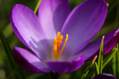 Spring (LuckyMeyer) Tags: green lila violett garden spring makro yellow flower fleur plant