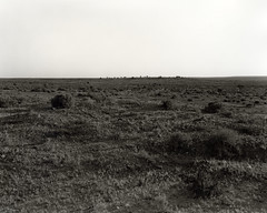 White Cliffs, NSW (2015) (James__M) Tags: 4x5 film analog landscape outback nsw australia