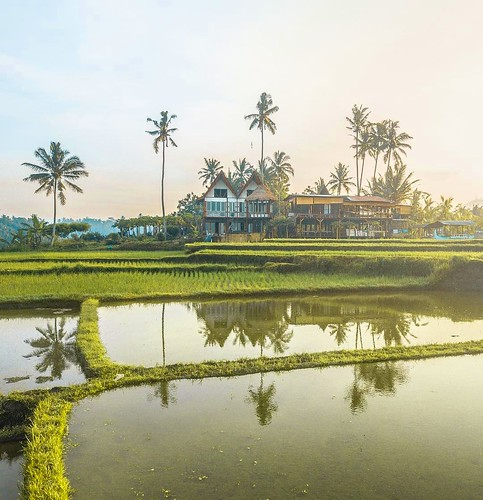 🌴🌾 Bali is absolutely covered in Rice fields, and what a glorious sight they Can be! Its funny that the daily hustle of so Many balinese farmers, translates to sheer beauty spread across the entire Island! 🙏 lucky for us, we hav