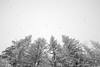 PIO_2945m (MILESI FEDERICO) Tags: milesi milesifederico piemonte piedmont alpi alpicozie altavallesusa altavaldisusa inmontagna inverno italia italy iamnikon ice wild winter neve nevicata visitpiedmont valsusa valdisusa valliolimpiche valledisusa sauzedicesana nikon nikond7100 nital natura nat nature cittàmetropolitanaditorino europa europe 2018 d7100 dettagli details paesaggio landscape fiocchi fiocchidineve