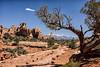 Arches National Park - The Windows Section (++sepp++) Tags: moab utah usa us landschaft landscape landschaftsfotografie sonnig sunny sandstein sandstone baum trees fels stone rock