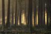 Forest Bathing (der_peste (on/off)) Tags: nature haze foggy misty fog mist moody mood godrays forestscape treescape woods sombre trees crepuscularrays raysoflight light forest