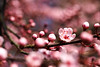 Adorable... (ej - light spectrum) Tags: blüte blossom macro makro spring frühling olympus omd em5markii mzuiko schweiz switzerland natur nature pink bokeh colorful springtime jahreszeiten seasons blume flower