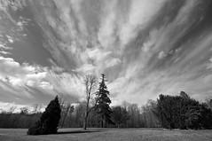 Ciel de traine (jeangrgoire_marin) Tags: sky weather monochrome garden lookinup converging breathing
