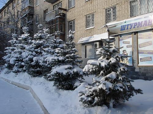 Ёлки в снегу ©  ayampolsky