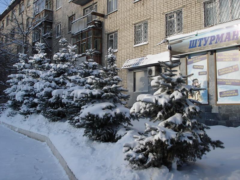 фото: Ёлки в снегу
